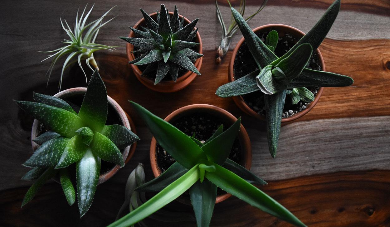 gezonde kamerplanten