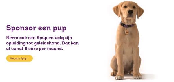 sponsor een pup - huisdier kiezen